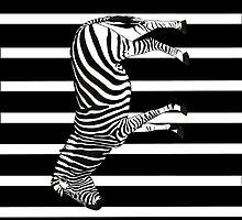 Zebra by AlexanderPip