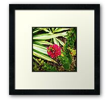 Bougain-Stalk Framed Print