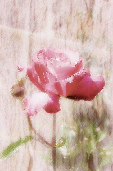 Serenity by Carol Bleasdale