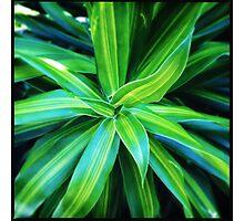 Tropical Plant Love Photographic Print