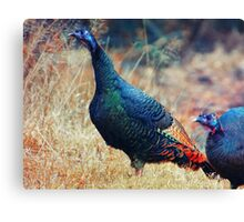 Wild Turkeys Scratching out a Living Canvas Print
