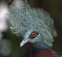 D'ya like my Hairdo??? by Krys Bailey
