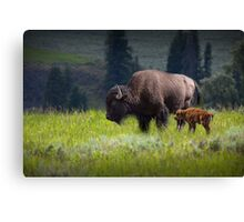 American Buffalo Mother and Calf in Yellowstone Canvas Print