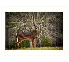 White Tailed Deer Eight Point Buck Art Print