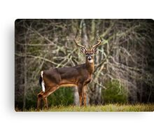 White Tailed Deer Eight Point Buck Canvas Print