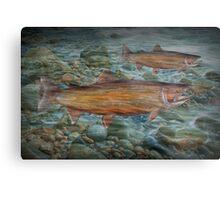 Steelhead Trout Migration in Fall Metal Print