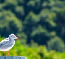 White bird Sticker