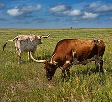 Longhorns on the Prairie by Randall Nyhof