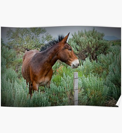 Mule in Wyoming Poster