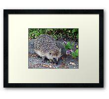 My Hedgehog Neighbor Framed Print