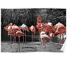 Pink Flamingos on Monochrome Poster