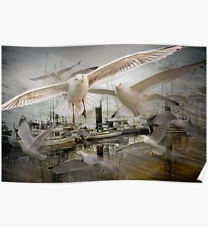 Gulls moving amidst Boats in a foggy harbor Poster