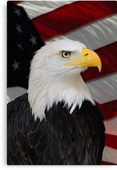 Mr. Bald Eagle by Charles McFarlane