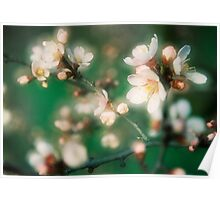 Blossom I. Poster