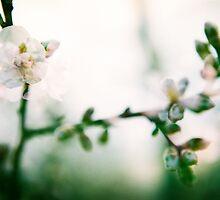 Blossom II. by Zuzana Vajdova