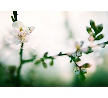 Blossom II. Photographic Print