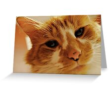 The Cat Knows Greeting Card