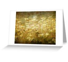 Sun bathed Daisies along a Stream Shore Greeting Card