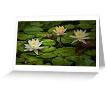 Lily Pads and Blossoms No 186 Greeting Card