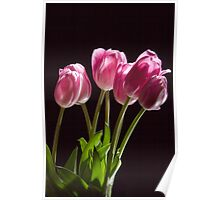 The Perennial Tulip Flowers Poster