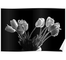 Perennial Tulip Flowers in Black and White No. 0105 Poster