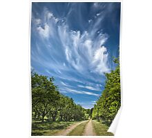 Road through an Orchard in West Michigan Poster