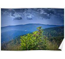 Milkweed Plants along the Blue Ridge Parkway Poster
