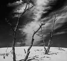 Black and White Photograph of Silver Lake Dune with Dead Trees and Cirrus Clouds by Randall Nyhof