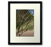 Trees at the edge of a Dune at Silver Lake Framed Print