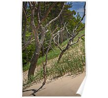 Trees at the edge of a Dune at Silver Lake Poster