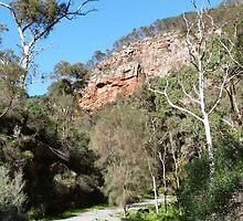 The Path to the Waterfall!  Morialta Cons. Park. Adelaide. S.Australia. by Rita Blom