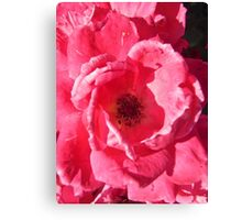 Governor Generals Roses 33 Canvas Print