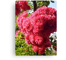 Governor Generals Roses 35 Canvas Print