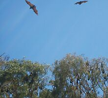Flying Foxes in Flight by KittenFlower