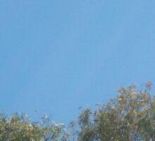 Flying Foxes in Flight Sticker