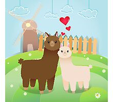 Alpaca's couple Photographic Print