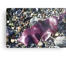 Purple Seaweed Metal Print