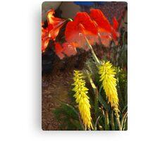 Aloe and allamanda Canvas Print
