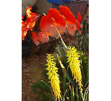 Aloe and allamanda Photographic Print