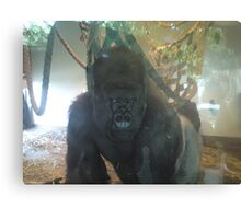 Gorilla through Glass Canvas Print