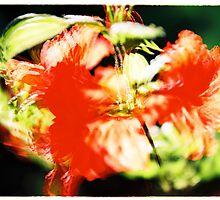 Rhododendron I. by Zuzana Vajdova