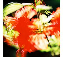 Rhododendron I. (square) by Zuzana Vajdova