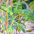 Banana Palm in the Tropics by gillsart