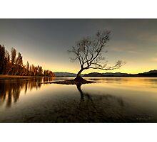 Wanaka - That Tree #1 Photographic Print