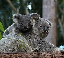 Koala Mother and Baby by JLOPhotography