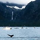 Humpback Whales in Lynn Canal by Yukondick