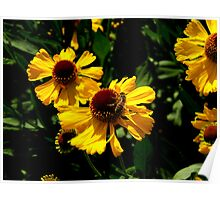 Yellow Flower and Honey Bee Poster