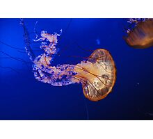 Jelly Fish 1 Photographic Print