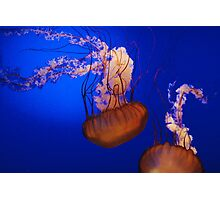 Jelly Fish 2 Photographic Print
