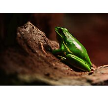 The Frog Photographic Print